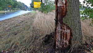 Alkollü first lady'yi ağaç durdurdu