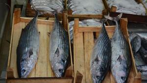 Karadenizde torik bereketi; tanesi 125 liraya satılıyor