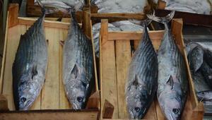 Karadenizde yakalandı Tanesi 125 lira