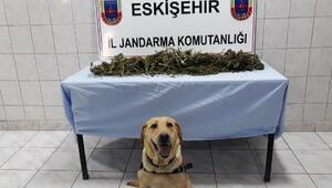 Barakadaki uyuşturucuları Entel buldu