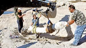 7.5 milyon yıllık fosile alçı ceket