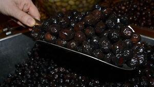 Bursada 10 yılın en yüksek zeytin rekoltesi bekleniyor