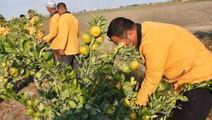 Çiftçi hükümlülerden yerli üretime destek