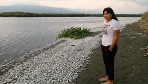 Asi Nehrinde balıklar oksijen yetersizliğinden telef olmuş