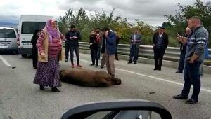 Kazada ölen ayıya Allah kahretsin seni; arabam mahvoldu diye beddua etti (2)- (Yeniden)