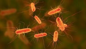 Bulaşıcı bir bakteri antibiyotik saldırısında kış uykusuna geçiyor