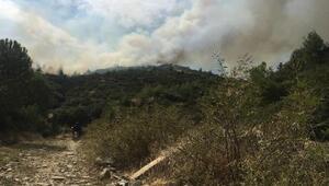 Ağaçlandırma sahasında yürek yakan yangın