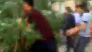 Devrilen ağacın altında kalan baba-oğul yaralandı