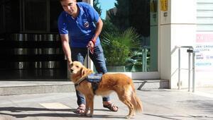 Terk edilen köpeğe sahip çıkıp, iş merkezi güvenliğine aldılar
