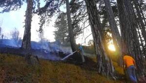 Ormandaki yangın büyümeden söndürüldü
