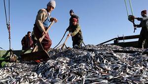 Balıkçılar gözünü hamsiye dikti