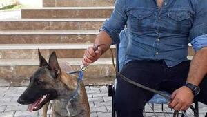 Akıllı köpekler, polisle birlikte görev yapıyor