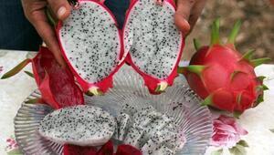 Ejder meyvesinin faydaları nelerdir