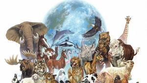 Hayvanları Koruma Günü ne zaman ortaya çıktı