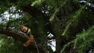 Troyada bitkin halde bulunan yavru sincaplar tedavi edildi