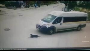 Servis minibüsü, köpeği ezip yoluna devam etti