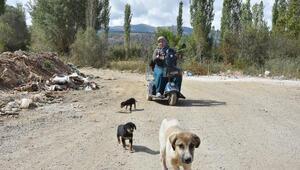15 yıldır sokak hayvanlarına bakıyor