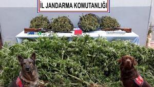 Trabzon'da uyuşturucu operasyonu: 3 gözaltı