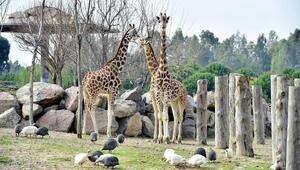 Doğal Yaşam Parkına 10 yılda 8.4 milyon ziyaretçi