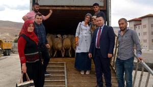 Ulukışla'da 4 çiftçiye 148 koyun verildi