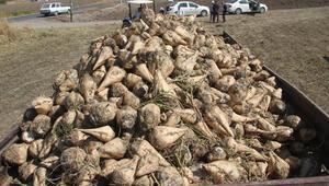 Yağış yetersiz kaldı pancarda üretimi azaldı