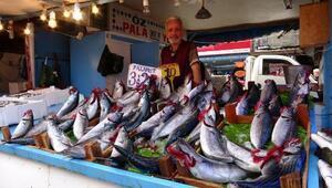 Karadenizde palamutun bol, fiyatın yüksek olmasında stok iddiası