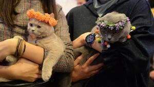 Ankarada Kedi Güzellik Festivali