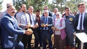 Milli ve yerli patatesler tarla gününde hasat edildi