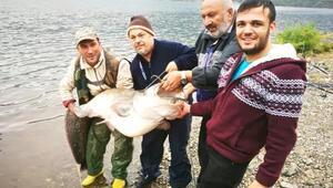 Kızılırmakta dev yayın balığı yakaladı