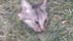 Parkta başı kesilmiş kedi bulundu