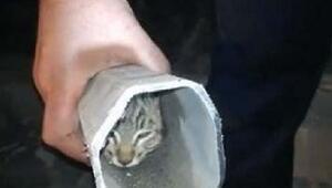 Elektrik direği içinde sıkışan kedi kurtarıldı