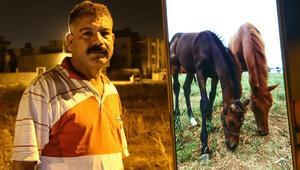 Adanada yarış atını çaldılar: Başıma ilk kez böyle bir olay geldi