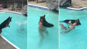 Sahibini kurtarmak için suya böyle atladı