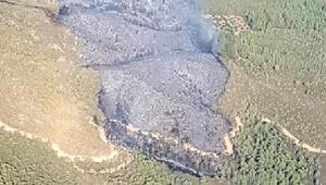 Marmariste ralli kazasında kül olan ormanlık alan ağaçlandırılıyor