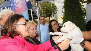 Pati Şenliğinde 22 yavru köpek sahiplendirildi