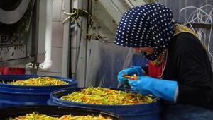 Turşucu köyünde kış öncesi üretim hızlandı