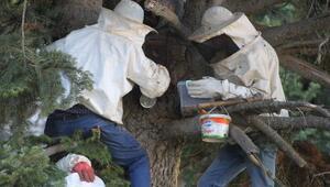 Kilosunu 250 TLye sattıkları doğal orman balı geçim kaynakları oldu
