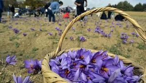 Karabükte ikinci Safran Festivali
