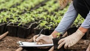 Bitkisel üretimde zararlılarla mücadele destekleri artırıldı