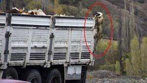 Çoban köpeğini o halde gören şoke oldu