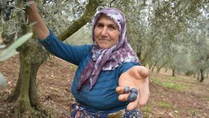 Zeytinciler taban fiyatlarının 10 kuruş arttırılmasına tepki gösterdi