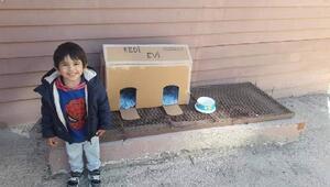 4 yaşındaki sezerden sokak kedilerine ev
