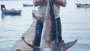 Boylarından büyük kılıç balığı tuttular