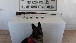 Trabzonda jandarmadan eş zamanlı operasyon