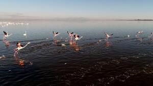Flamingoların kışlağı Adana