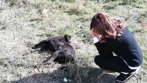 Kuzularına zarar verdiğini iddia ettiği köpeği öldürdü