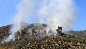Mangal ateşi zeytin ağaçlarını yaktı