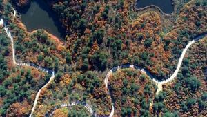 Yalova ormanlarında sonbahar güzelliği