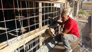Emekli maaşıyla sokak hayvanlarına bakan emekliye para cezası
