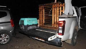 Yaralı sokak hayvanları tedaviye alındı